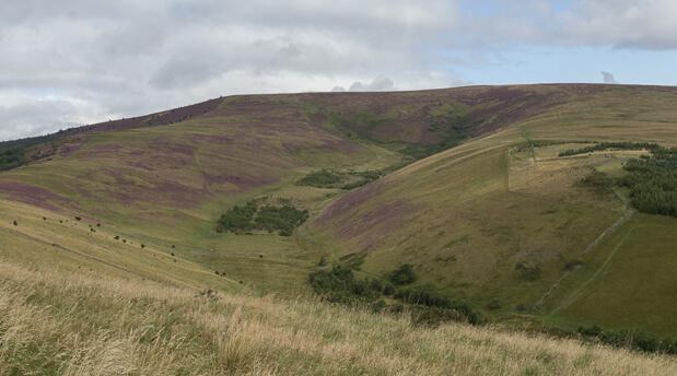 Minch Moor Purple Heather