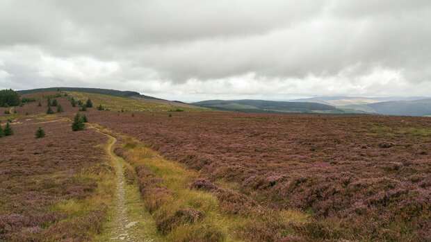 Southern Upland Way to Brown Knowe.