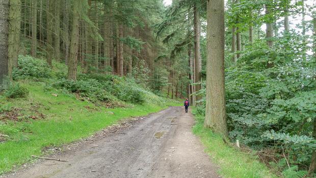 Descending through tree in Philip Haugh Estate